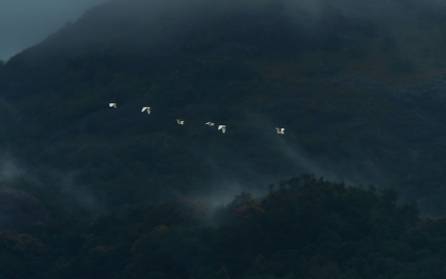 Egrets flying in the foggy mountains of western ghats, kanyakumari district, india