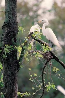 Egrets perching in tree