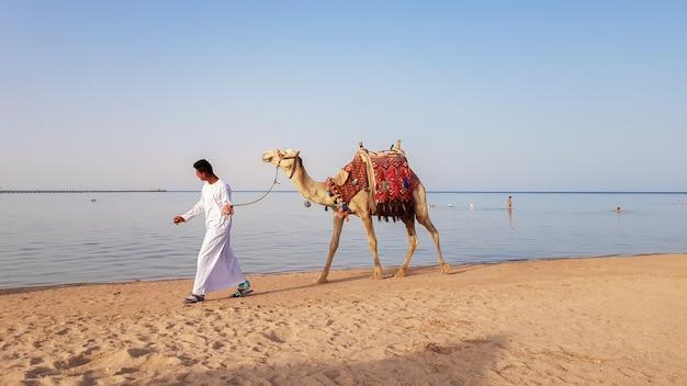 Египет, шарм-эль-шейх - 15 июня 2019 г .: владелец верблюда гуляет по пляжу и ищет туриста, который предложит поездку на верблюде. местный житель египта предлагает туристам прокатиться по песчаному берегу.