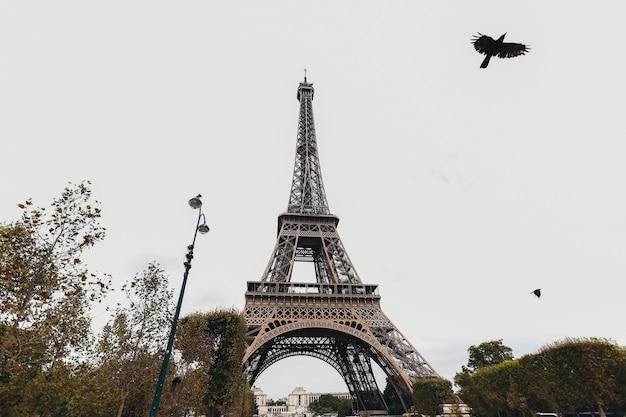 Эйфелева башня осенью. летящая птица у эйфелевой башни. фото высокого качества