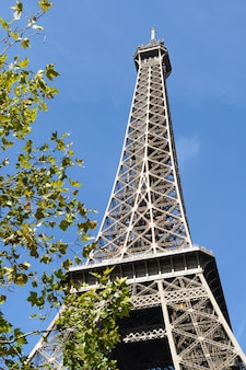 Eiffel tower with leaves in front