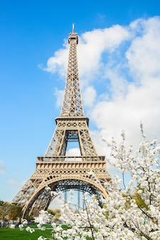 Eiffel tower  with spring white blooming flowers, paris, , france