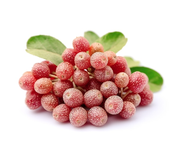 Ветвь ягод elaeagnus latifolia