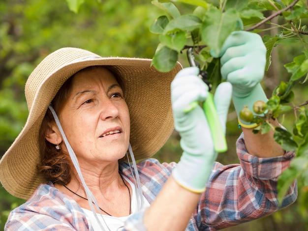 Пожилая женщина срезает листья с растения