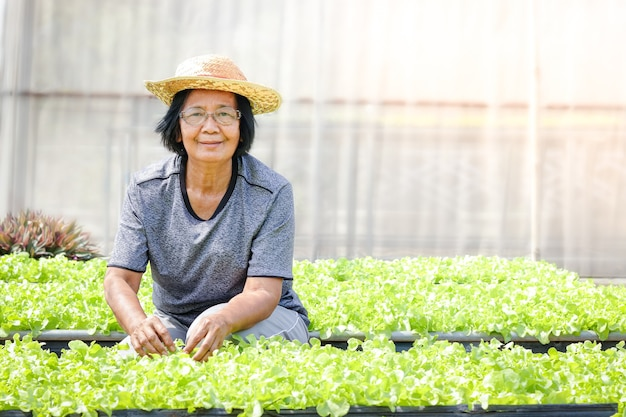 高齢のアジア人は、地上の区画で有機グリーンサラダ野菜を栽培しています
