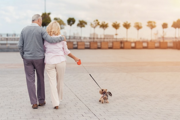 An elderly couple is walking in the square with her little dog.