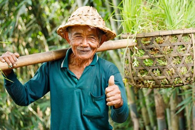 彼の田んぼに取り組んでいるバリ島の高齢のイドネシアの農民