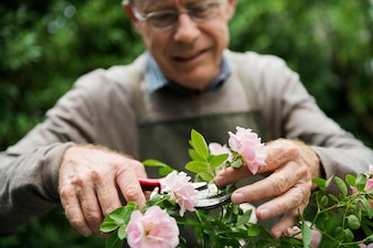 Elderly man flower gardening