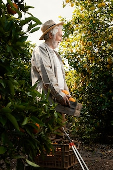 Uomo anziano nella piantagione di alberi di arancio