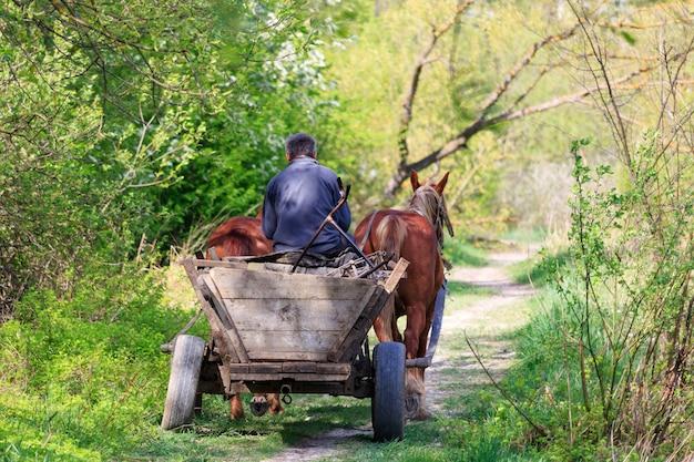 Пожилой мужчина едет на старой сломанной телеге, запряженной двумя лошадьми, по лесной дороге в солнечный день