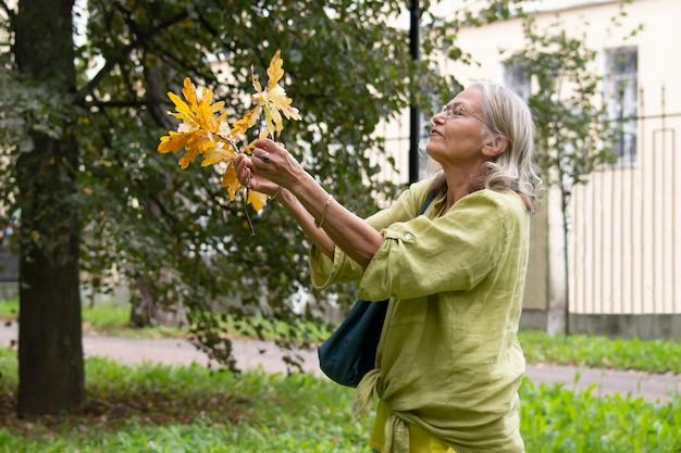 나이든 여성은 노란 잎이 달린 떨어진 오크 나뭇가지의 꽃다발을 열정적으로 수집합니다
