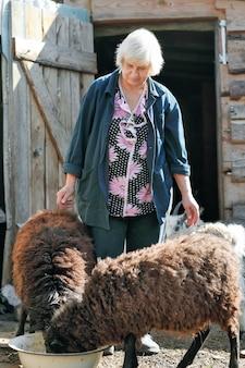 양 먹이 노인 여성