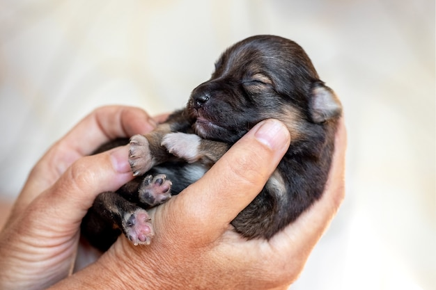 小さな新生児の子犬、動物への愛を保持している年配の女性