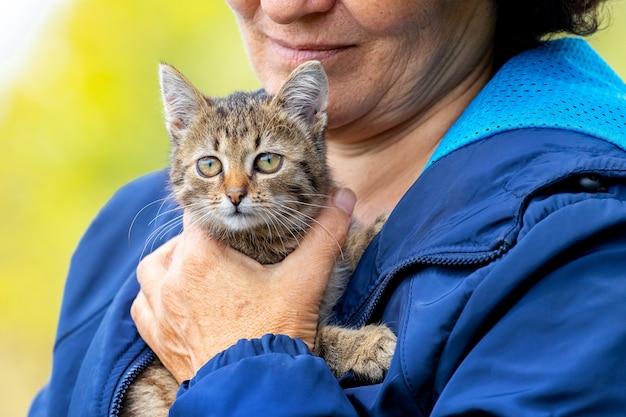 小さな縞模様の子猫、女性の腕の中で子猫を保持している年配の女性