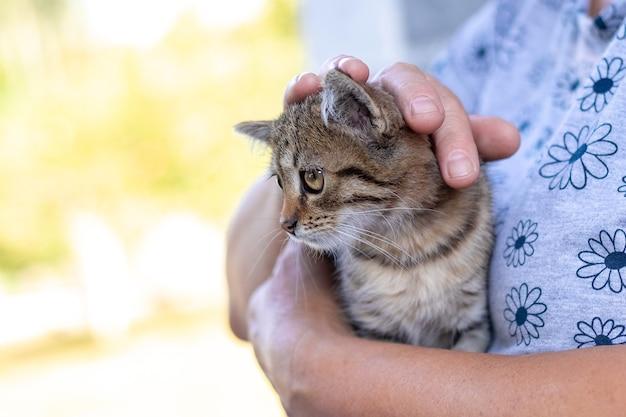小さな縞模様の子猫を抱いている年配の女性。動物の世話