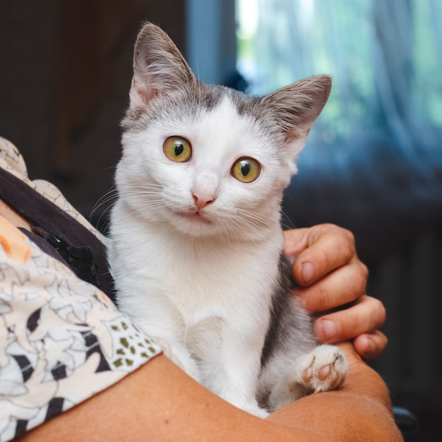 白い子猫を抱いた年配の女性