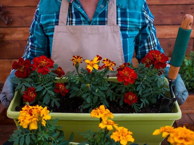 花やハーブで活動中の年配の女性。引退した高齢者の概念-赤い花の花瓶を保持します