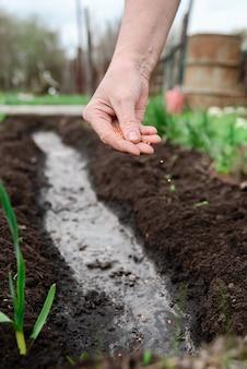 마을 땅에 씨앗을 심는 노인 여성