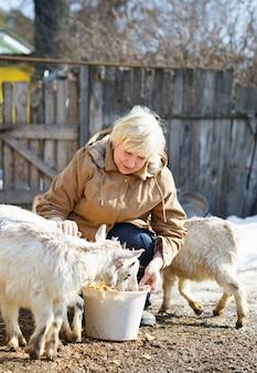 晴れた春の日に農場で山羊に餌をやる年配の女性年配の女性晴れた春の日に農場で山羊に餌をやる