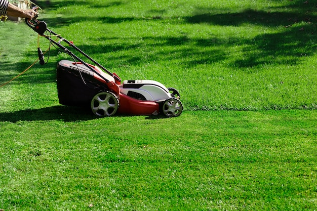 Electric lawnmower cutting grass in the garden