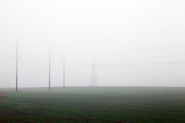 Электрические столбы в сельскохозяйственном поле в тумане. в растущей зеленой траве. снято на фоне серого неба.