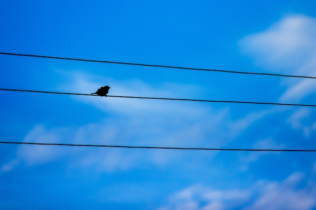 On an electric wire sits single bird