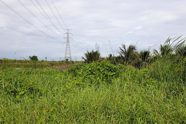 Electrical transmission line highvoltage tower in the meadow