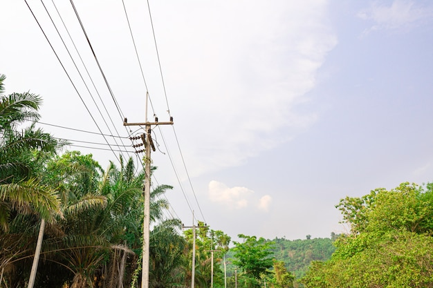 Electricity transmission line into the nature