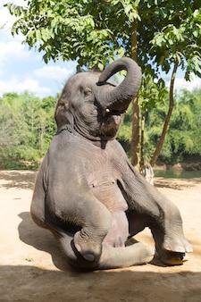 Elefant на открытом воздухе