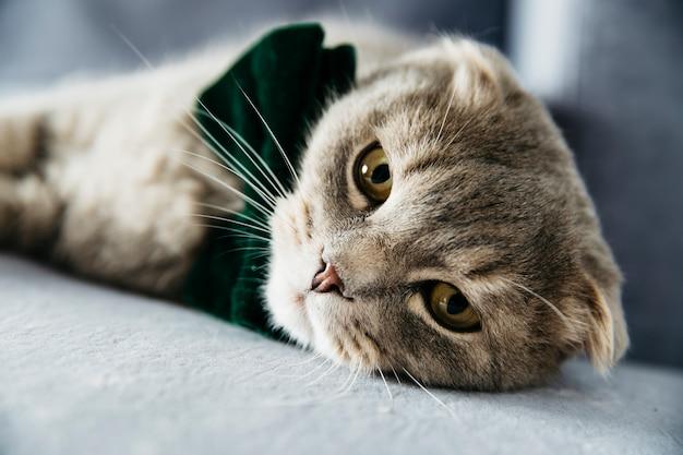 Elegant cat with bow tie