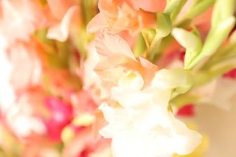 Elegant Light Floral Multipurpose Background