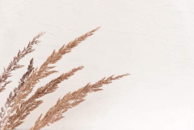 白い木の板にドライベージュの葦とエレガントな柔らかな明るい秋の表面