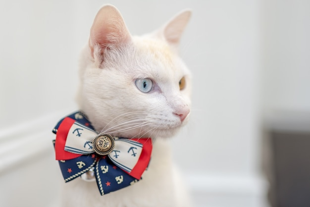 An elegant white boss cat, one eye is clear blue and one eye is clear yellow
