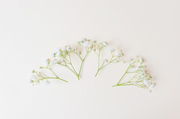 Elegant white gypsophila flowers