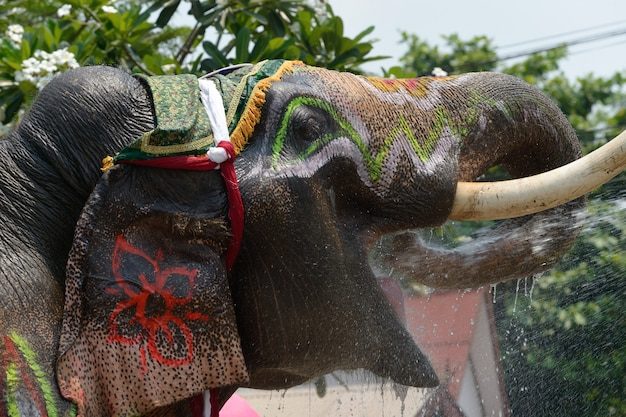 Elephan dress up to play in songkran water.