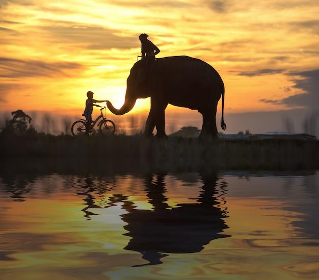 Слон и ребенок на велосипеде во время заката, силуэт слона на закате, таиланд