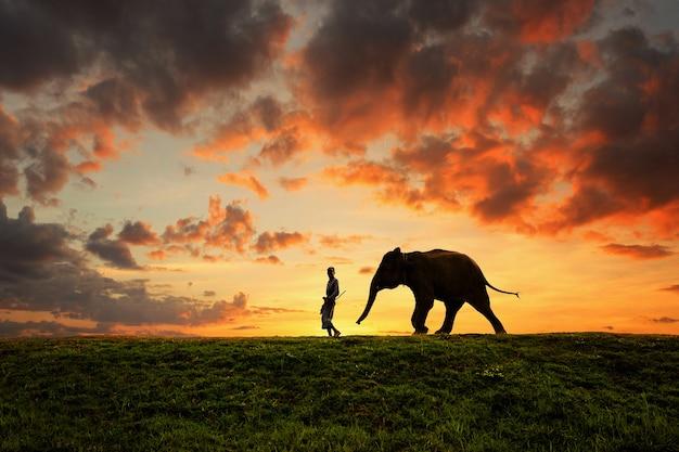 Родной город слона и человека в поле во время восхода солнца, сурин, таиланд