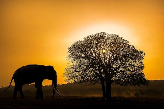 日没の背景に象と木のシルエット