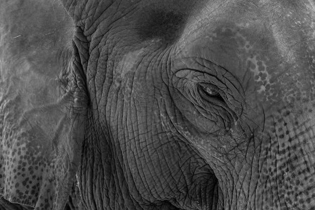 象、タイの動物、大きな動物、アユタヤ象