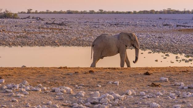 アフリカのナミビアのエトーシャ国立公園の滝壺に近づいている象。
