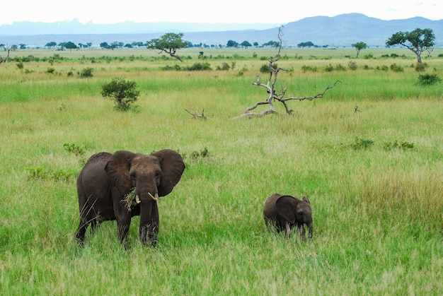 An elephant and a baby