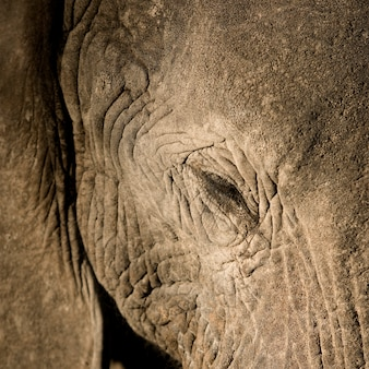 象のクローズアップ