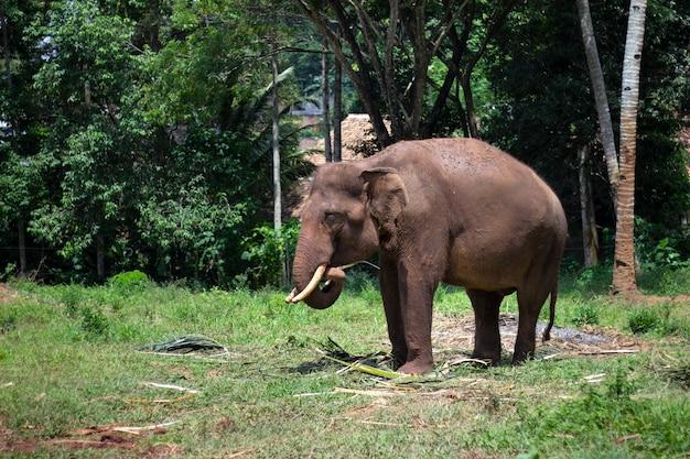 Слон ест листья в зоопарке