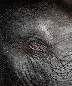動物園の象の目の詳細