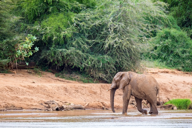 Elephant family on the banks of a river in the middle of the national park