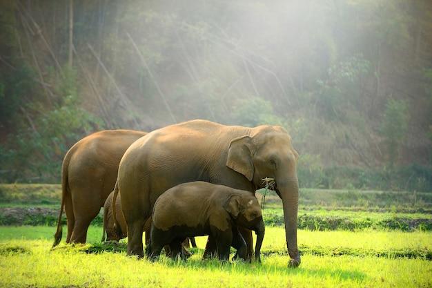 Elephant family walking through the meadow