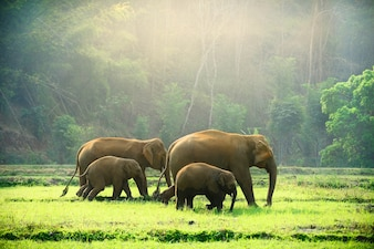 Elephant family walking through the meadow