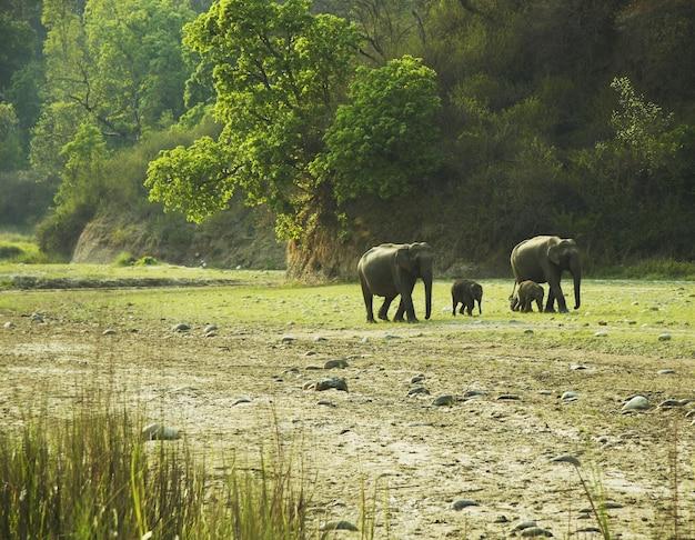 野生の森に行く象