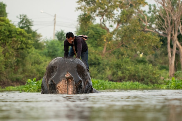 An elephant grope riding an elephant in the water