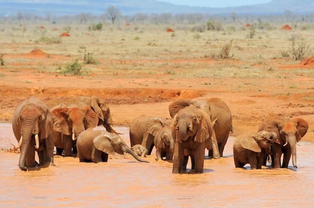 Слон в национальном парке кении, африка